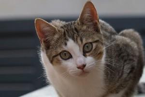 Casa di riposo archives amoremiao for Gatto che starnutisce