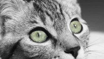 Inghilterra, spunta un serial killer dei gatti