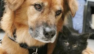 Cat sitter volontario: è il cane Boots