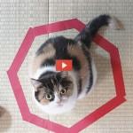 Gatti intrappolati nei cerchi [VIDEO]