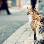 Perchè i gatti preferiscono morire da soli?