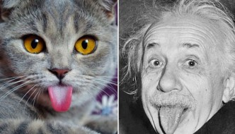 A chi somiglia quel gatto?