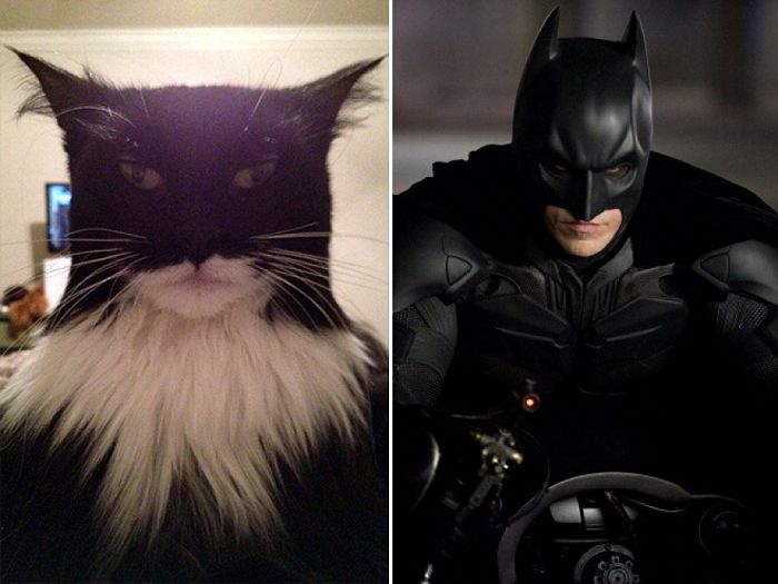 gatto batman