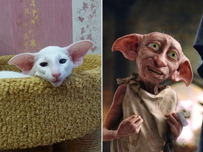 Dobby, personaggio di Harry Potter