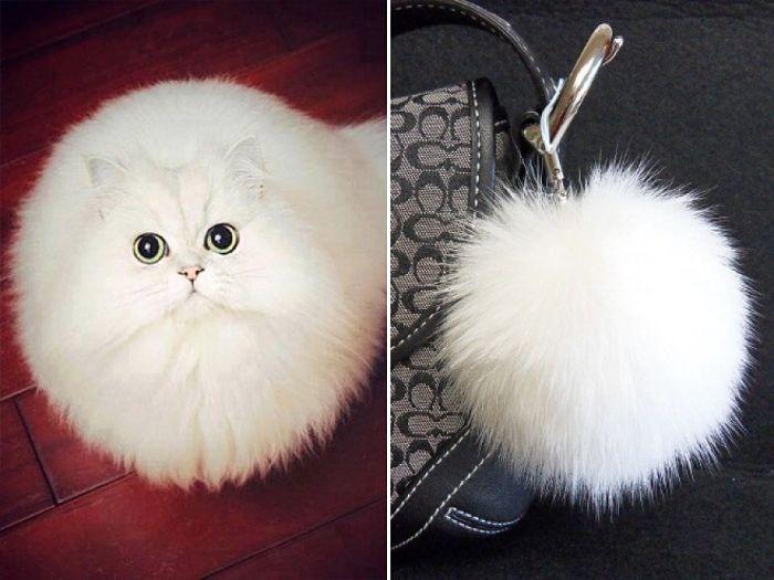gatto portachiavi