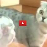 Gatto si stupisce allo specchio [VIDEO]