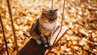 I 6 gesti d'amore che il tuo gatto ti dona ogni giorno