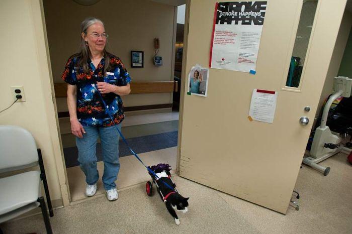 scooter gatto paralizzato 2