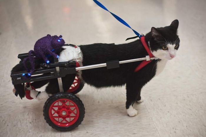 scooter gatto paralizzato 4
