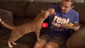 10 cose che i proprietari di gatti hanno sicuramente fatto [VIDEO]