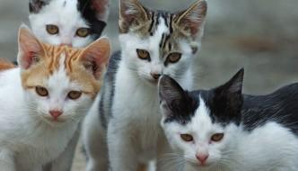 Quella colonia di gatti salvata dalla morte