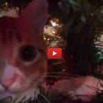 Come i gatti vedono il Natale [VIDEO]