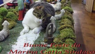 Marina, la gatta sindaco dopo Pippi, è una star!