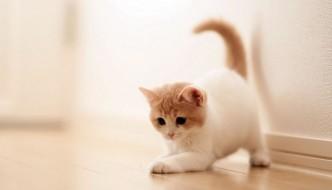 Mille gatti salvati in Cina: pronti per essere mangiati!