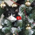 I gatti odiano gli alberi di Natale! [VIDEO]