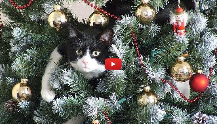 I gatti odiano gli alberi di natale video for Alberi natale artificiali