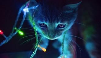 Gatti che distruggono il Natale