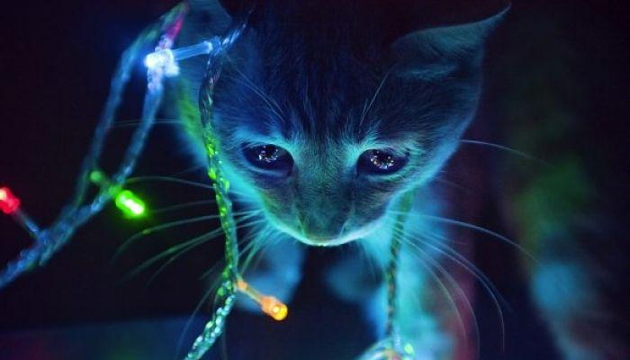 gatti natale 1