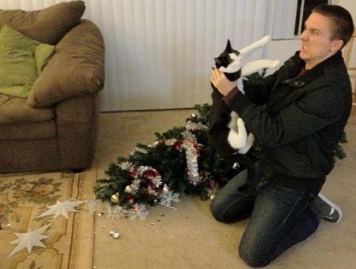 gatti natale 9