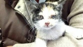 La bella storia della gattina chiamata A4