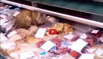 Gatto si sbafa 1000€ di pregiato caviale al banco frigo [VIDEO]