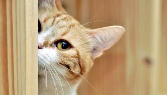 Tillie, il gatto troppo curioso sfuggito alla morte!