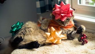«A Natale non regalate gatti: in estate saranno randagi»