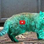 Svelato il mistero del gatto verde! [VIDEO]