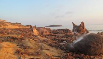 Salviamo i gatti marini di Su Pallosu!