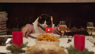 Un gatto e 13 cani al cenone di Capodanno! [VIDEO]