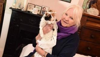 Chloe, la gatta sopravvissuta due mesi in un camino