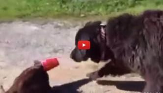 Gatto nei pasticci salvato dall'amico cane [VIDEO]