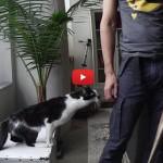 Il gatto più coccoloso del mondo! [VIDEO]