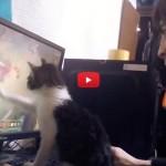 Giocare al pc con un gatto nei paraggi? Impossibile! [VIDEO]