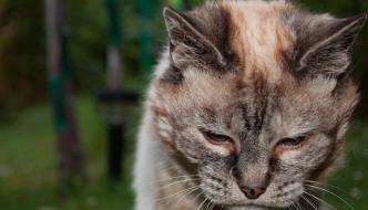 «Il tuo gatto è vecchio? Uccidilo»
