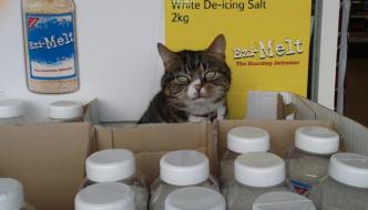 Mango, il gatto adottato da un supermercato