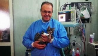 Operato al cuore Mario, il gatto cardiopatico