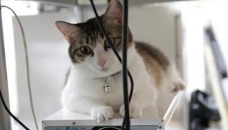 Azienda giapponese assume i gatti da ufficio