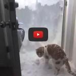 Rudiger, il gatto che ha un modo speciale di amare la neve [VIDEO]