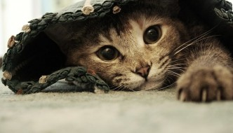 Come accudire il tuo gatto in 9 mosse. LA GUIDA DEFINITIVA!