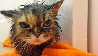 Facce da gatto: quando il bagnetto è uno stress!