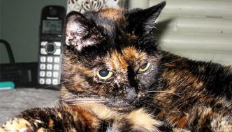 Tiffany, adesso è lei la gatta più vecchia del mondo
