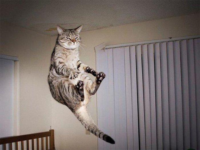 gatti volanti 1