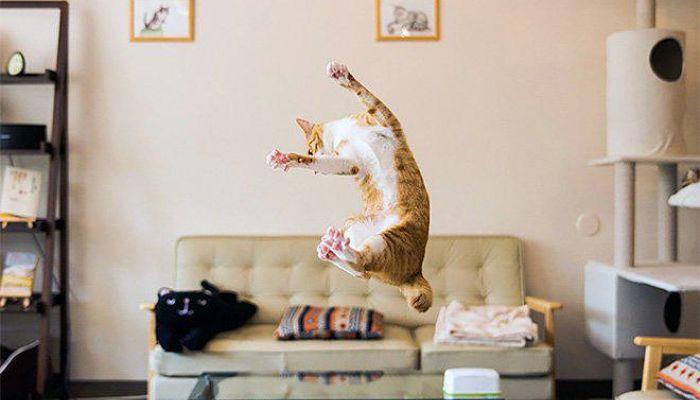gatti volanti 10