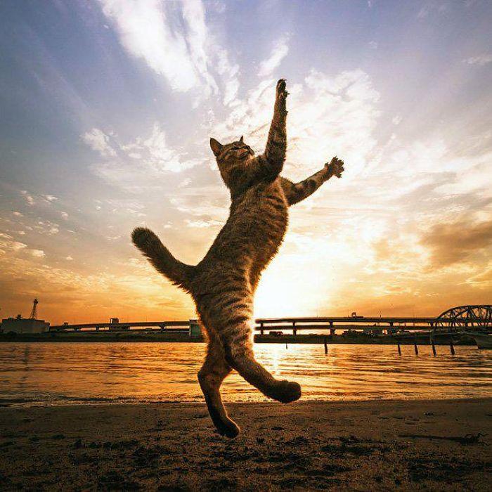 gatti volanti 11