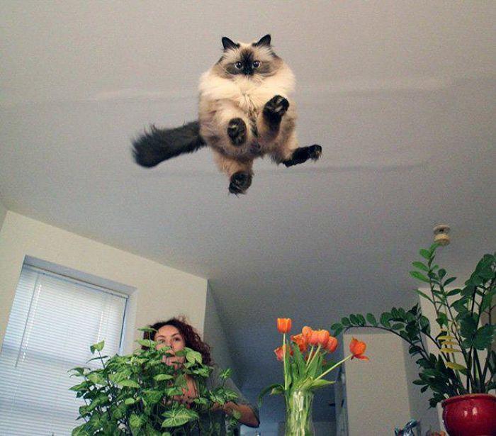 gatti volanti 12