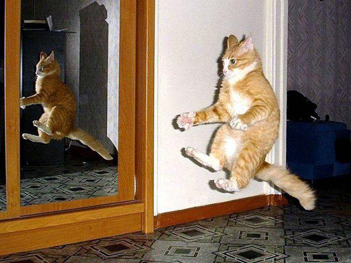 gatti volanti 2