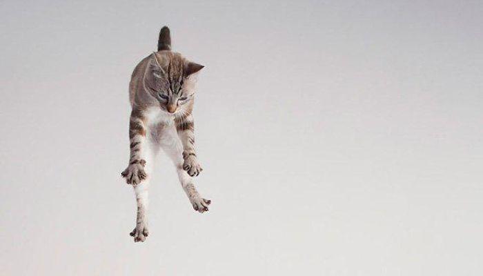 gatti volanti 3