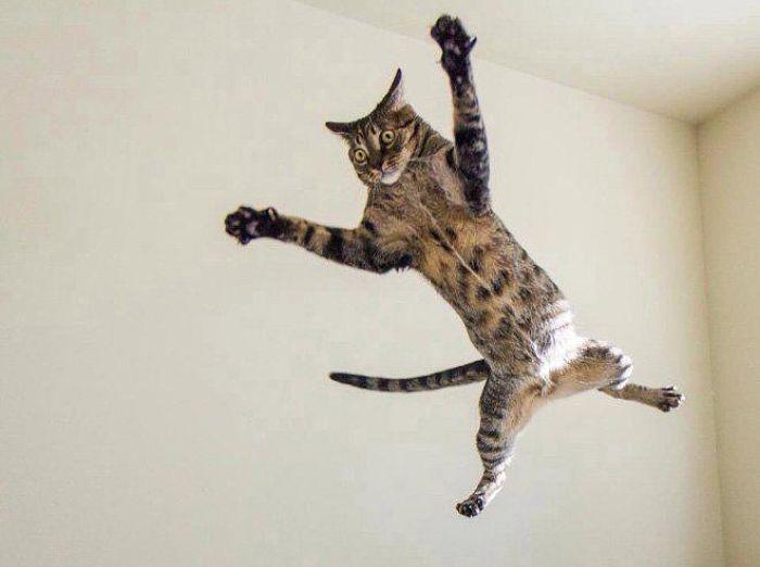gatti volanti 4