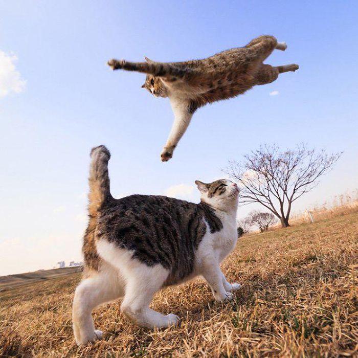 gatti volanti 5